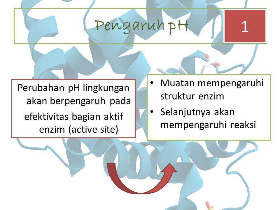 Pengaruh pH 1 Muatan mempengaruhi struktur enzim