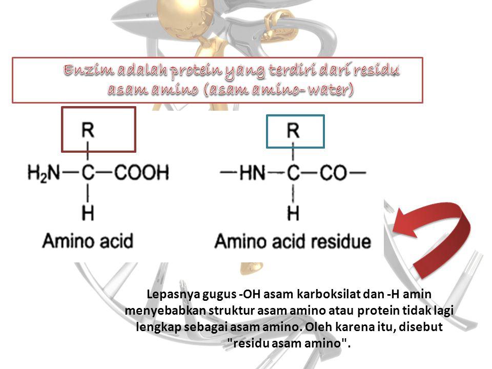 Enzim adalah protein yang terdiri dari residu asam amino (asam amino- water)