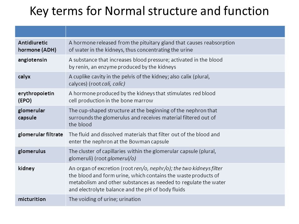 Key terms for Normal structure and function