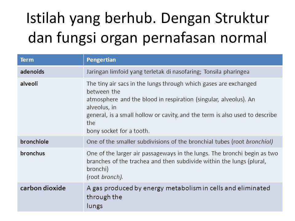 Istilah yang berhub. Dengan Struktur dan fungsi organ pernafasan normal