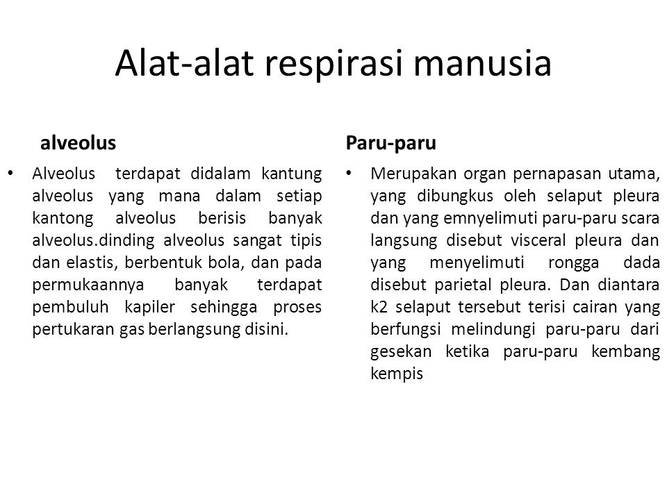Alat-alat respirasi manusia