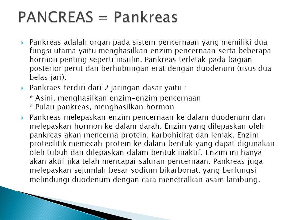 PANCREAS = Pankreas