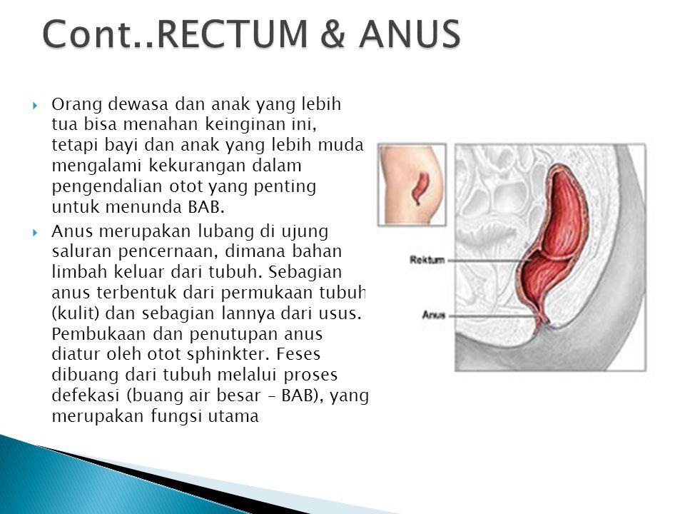 Cont..RECTUM & ANUS