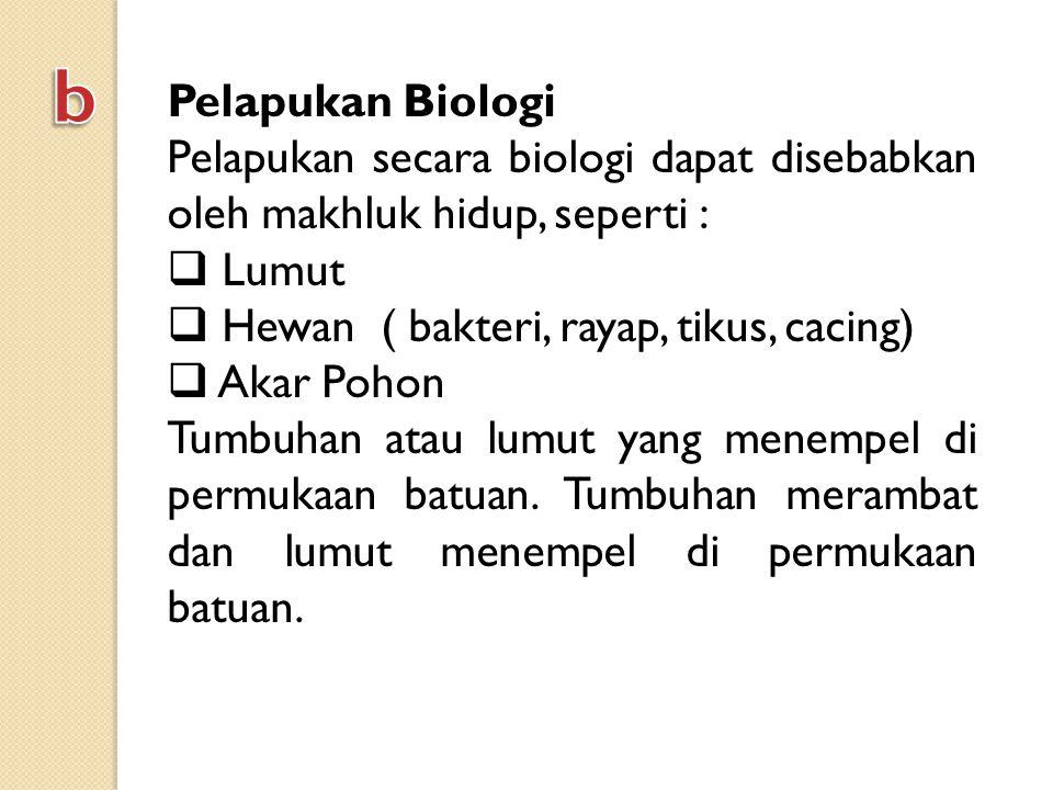 b Pelapukan Biologi. Pelapukan secara biologi dapat disebabkan oleh makhluk hidup, seperti : Lumut.
