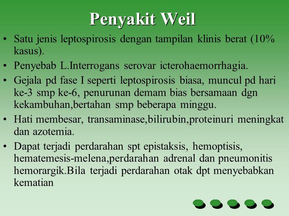 Penyakit Weil Satu jenis leptospirosis dengan tampilan klinis berat (10% kasus). Penyebab L.Interrogans serovar icterohaemorrhagia.