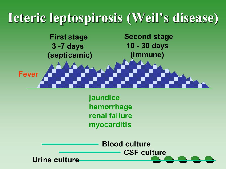 Icteric leptospirosis (Weil's disease)