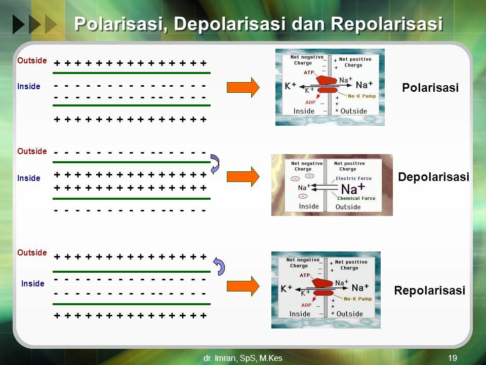 Polarisasi, Depolarisasi dan Repolarisasi