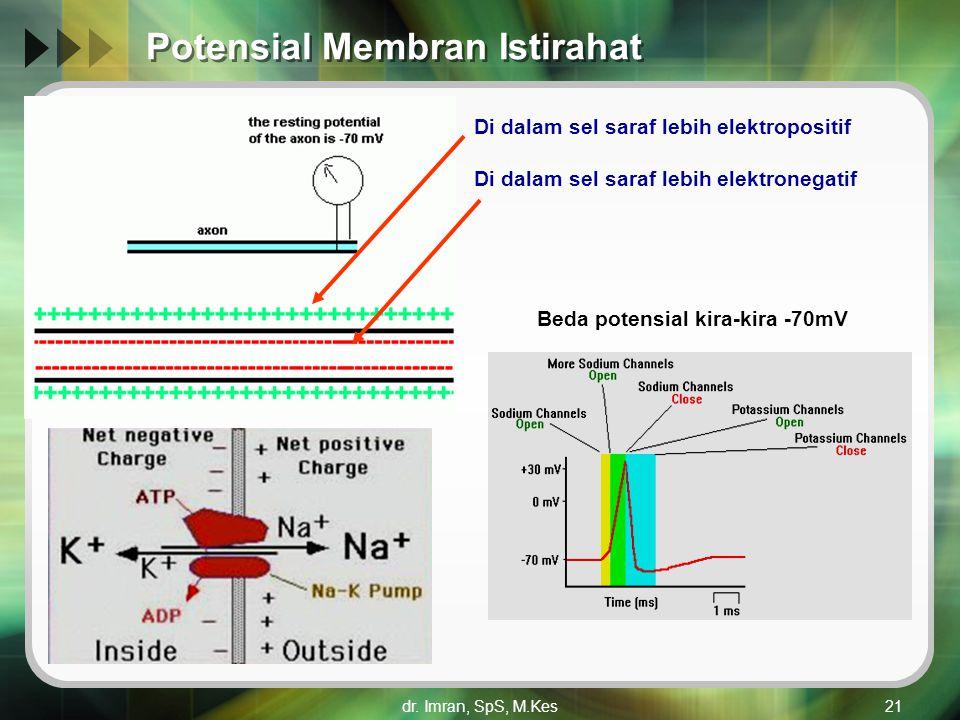Potensial Membran Istirahat