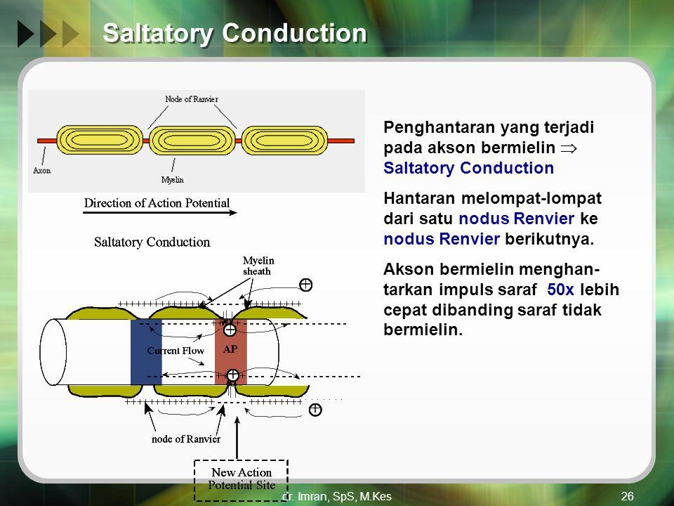 Saltatory Conduction Penghantaran yang terjadi pada akson bermielin  Saltatory Conduction.