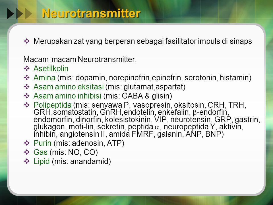 Neurotransmitter Merupakan zat yang berperan sebagai fasilitator impuls di sinaps. Macam-macam Neurotransmitter: