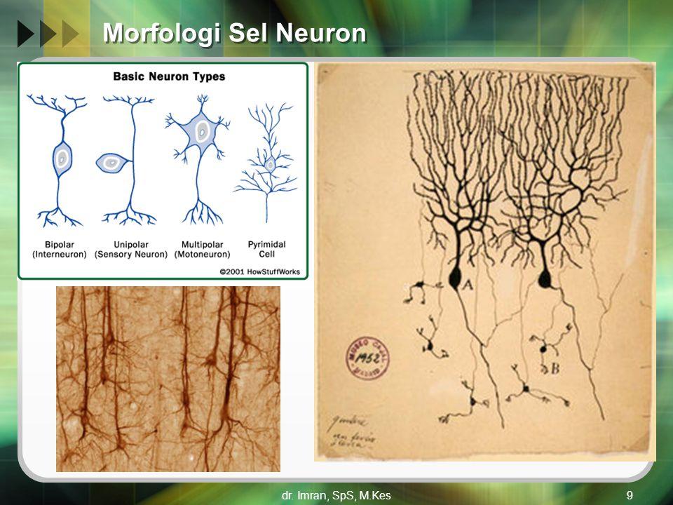 Morfologi Sel Neuron dr. Imran, SpS, M.Kes