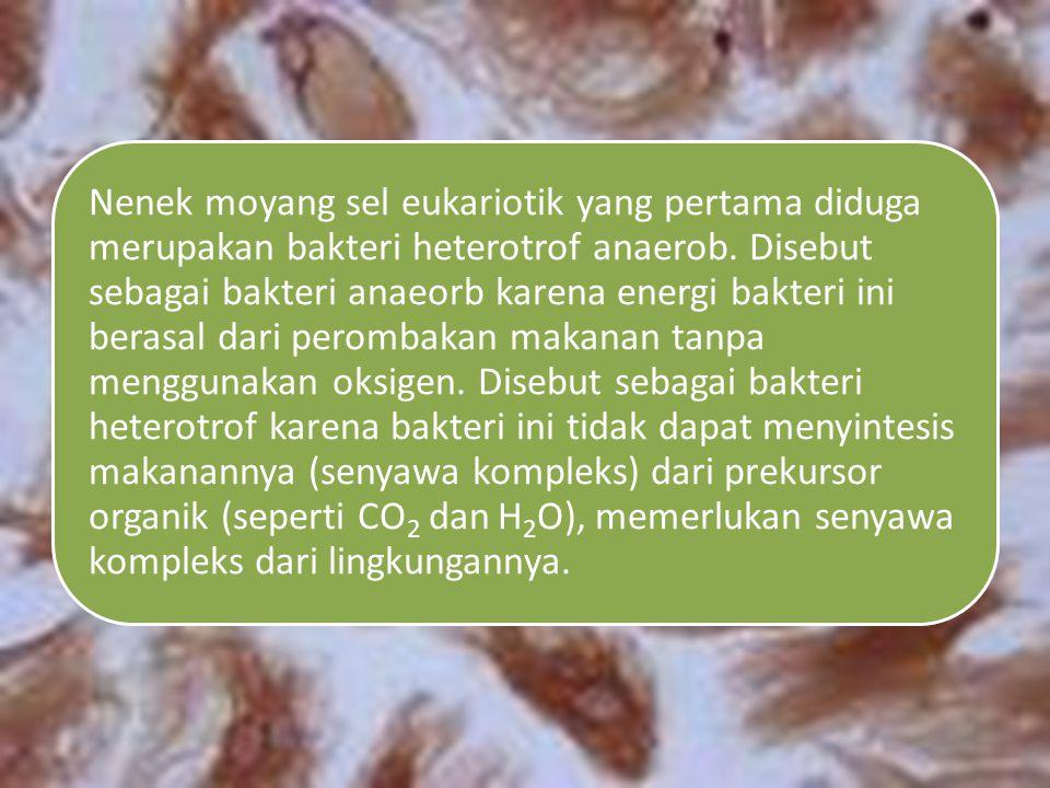 Nenek moyang sel eukariotik yang pertama diduga merupakan bakteri heterotrof anaerob.