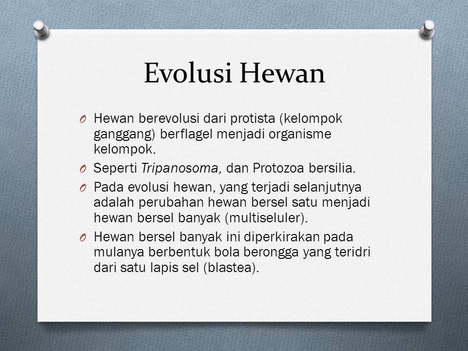 Evolusi Hewan Hewan berevolusi dari protista (kelompok ganggang) berflagel menjadi organisme kelompok.