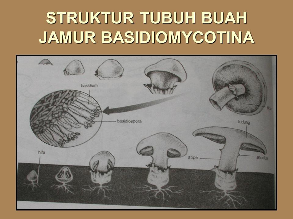 STRUKTUR TUBUH BUAH JAMUR BASIDIOMYCOTINA