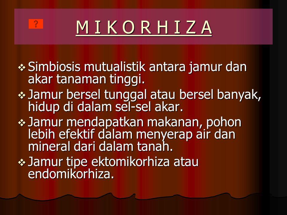 M I K O R H I Z A Simbiosis mutualistik antara jamur dan akar tanaman tinggi. Jamur bersel tunggal atau bersel banyak, hidup di dalam sel-sel akar.