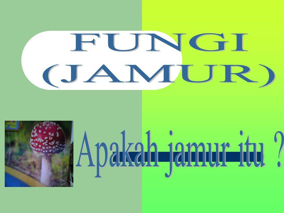 FUNGI (JAMUR) Apakah jamur itu