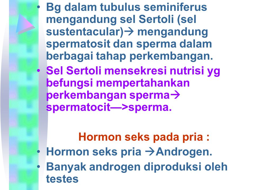 Bg dalam tubulus seminiferus mengandung sel Sertoli (sel sustentacular) mengandung spermatosit dan sperma dalam berbagai tahap perkembangan.