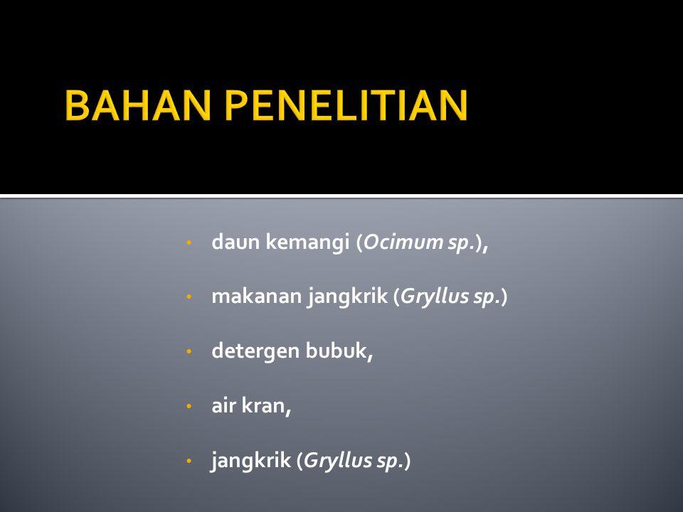 BAHAN PENELITIAN daun kemangi (Ocimum sp.),