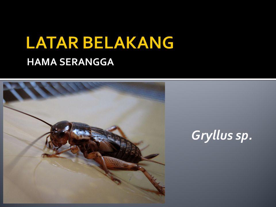 LATAR BELAKANG HAMA SERANGGA Gryllus sp.