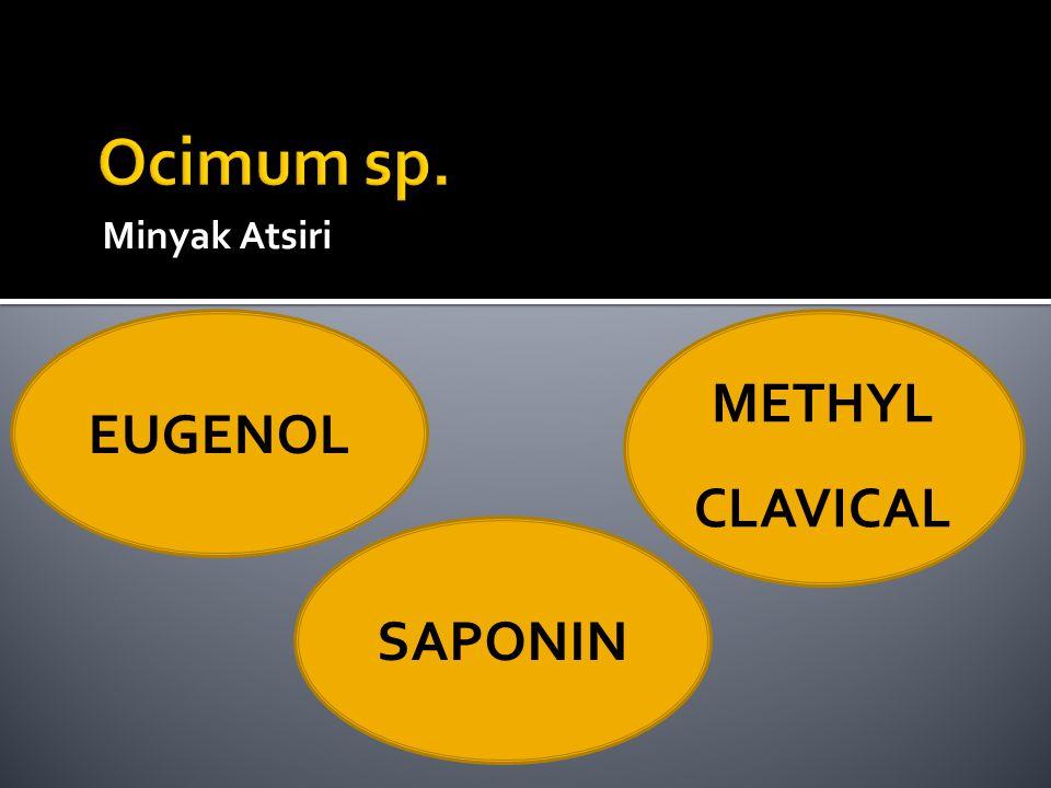 Ocimum sp. Minyak Atsiri EUGENOL METHYL CLAVICAL SAPONIN