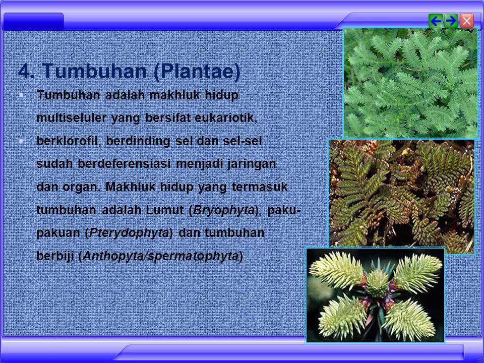 4. Tumbuhan (Plantae) Tumbuhan adalah makhluk hidup multiseluler yang bersifat eukariotik,