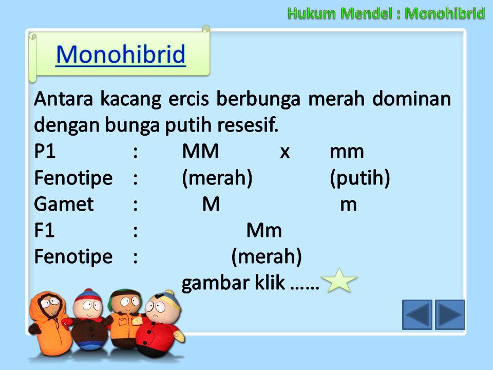 Hukum Mendel : Monohibrid