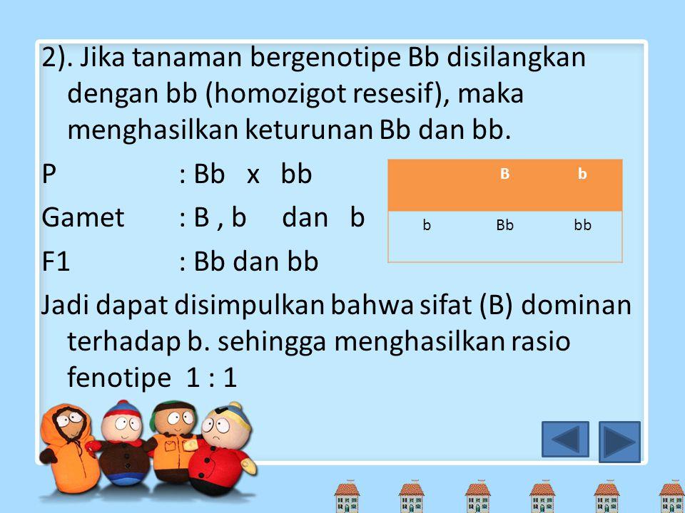 2). Jika tanaman bergenotipe Bb disilangkan dengan bb (homozigot resesif), maka menghasilkan keturunan Bb dan bb. P : Bb x bb Gamet : B , b dan b F1 : Bb dan bb Jadi dapat disimpulkan bahwa sifat (B) dominan terhadap b. sehingga menghasilkan rasio fenotipe 1 : 1