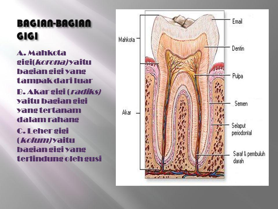 BAGIAN-BAGIAN GIGI A. Mahkota gigi(korona) yaitu bagian gigi yang tampak dari luar.