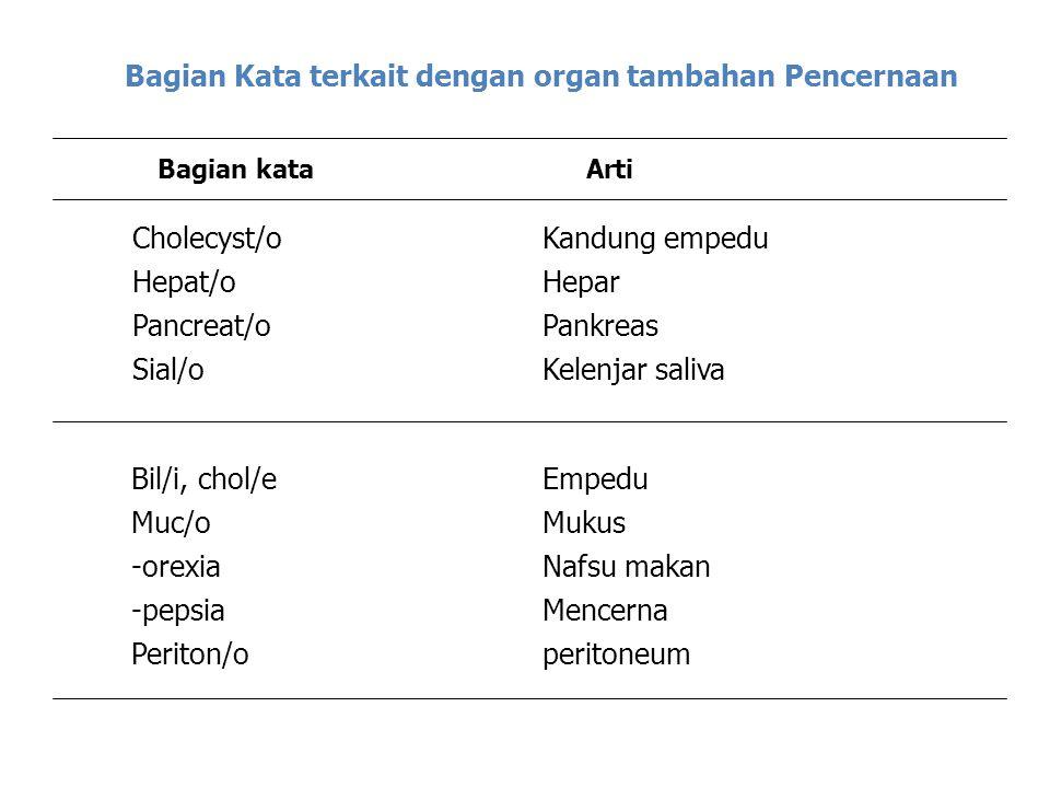 Bagian Kata terkait dengan organ tambahan Pencernaan