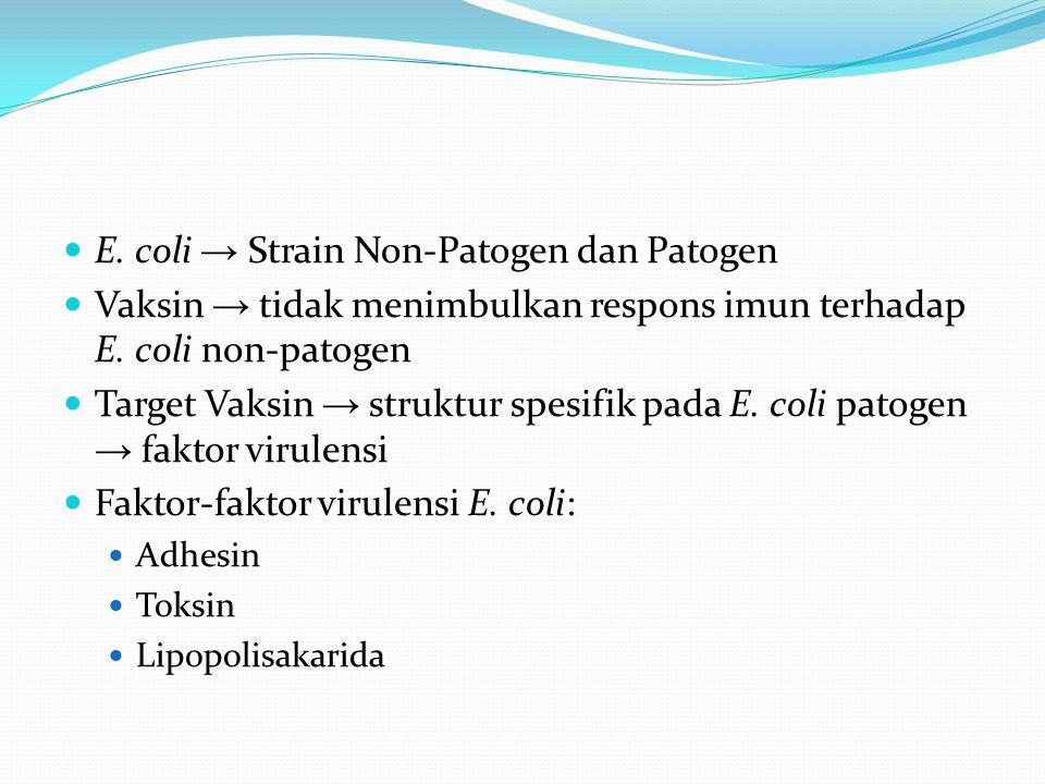 E. coli → Strain Non-Patogen dan Patogen