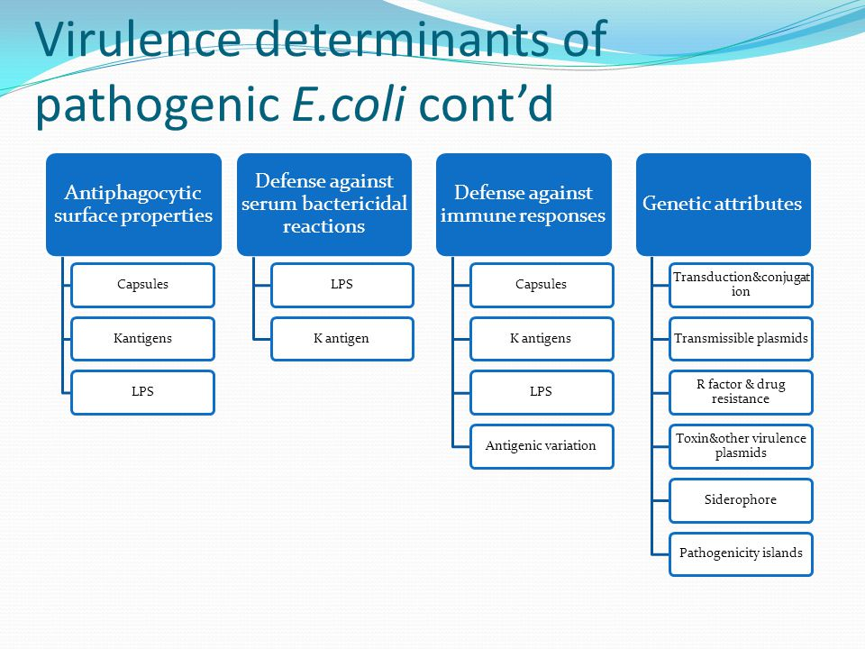 Virulence determinants of pathogenic E.coli cont'd