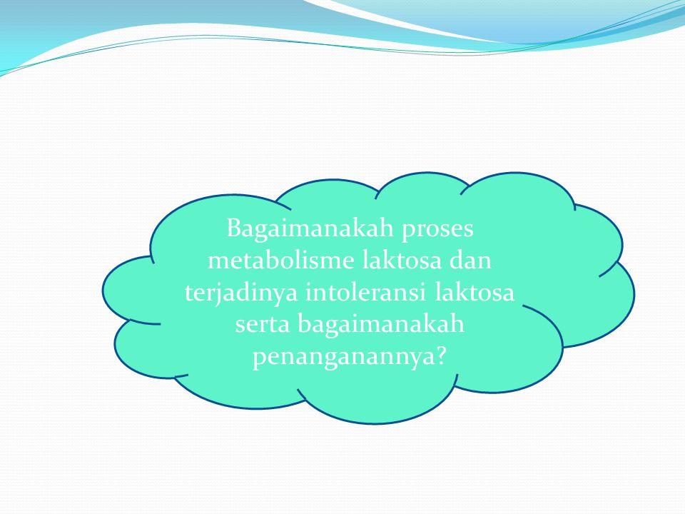 Bagaimanakah proses metabolisme laktosa dan terjadinya intoleransi laktosa serta bagaimanakah penanganannya