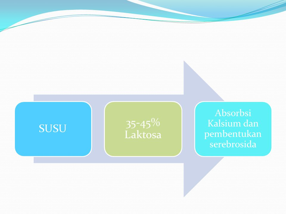 Absorbsi Kalsium dan pembentukan serebrosida