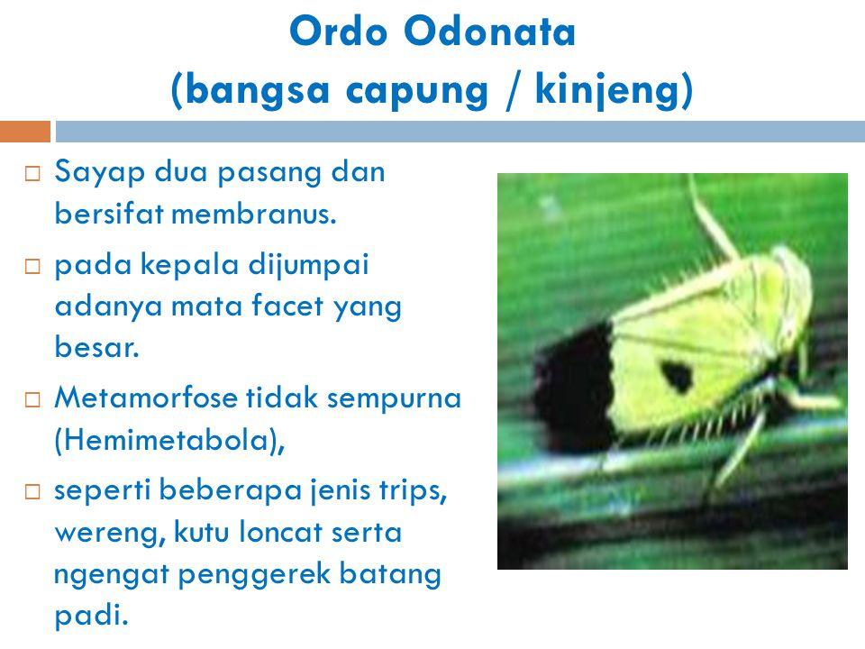 Ordo Odonata (bangsa capung / kinjeng)