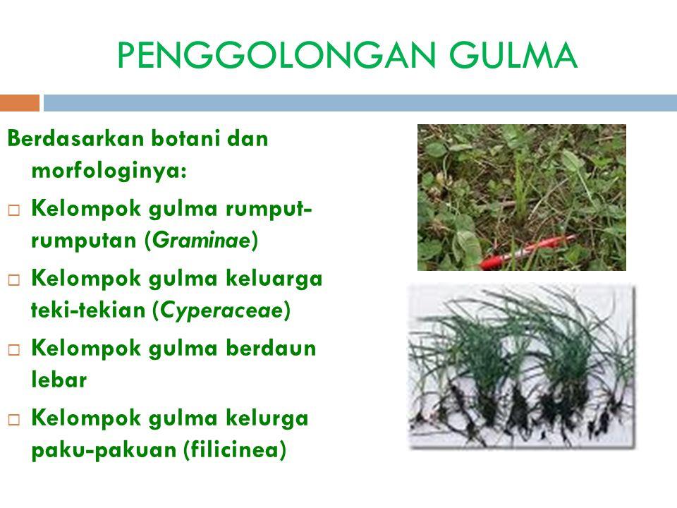 PENGGOLONGAN GULMA Berdasarkan botani dan morfologinya: