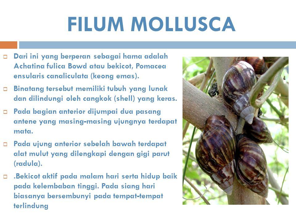 FILUM MOLLUSCA Dari ini yang berperan sebagai hama adalah Achatina fulica Bowd atau bekicot, Pomacea ensularis canaliculata (keong emas).