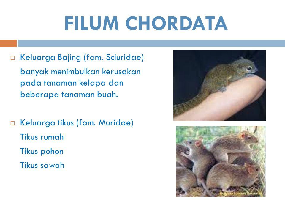 FILUM CHORDATA Keluarga Bajing (fam. Sciuridae)