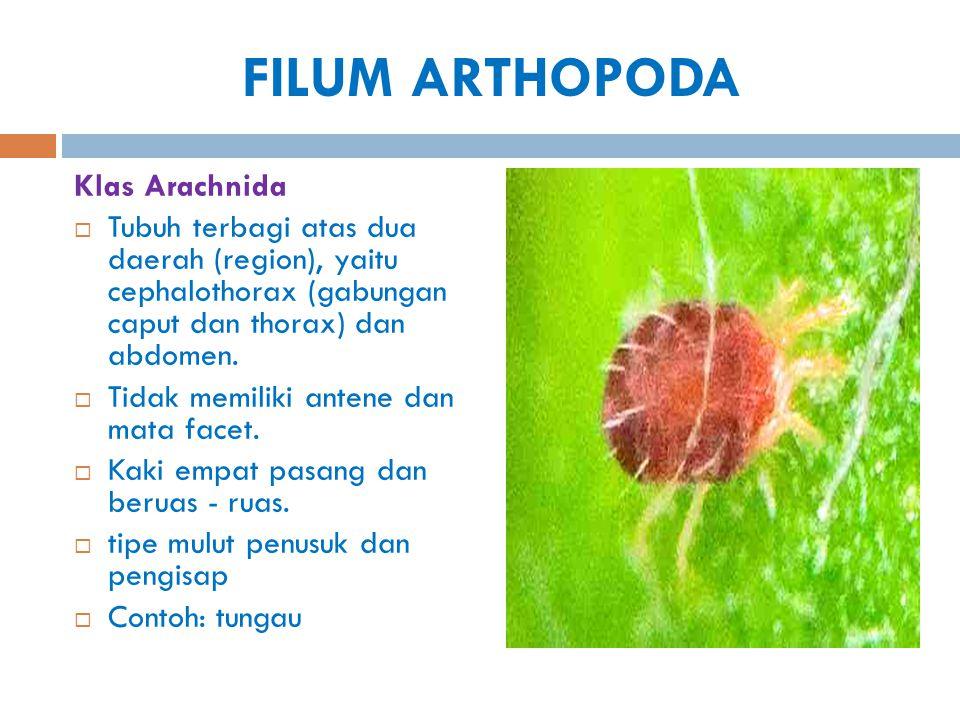 FILUM ARTHOPODA Klas Arachnida