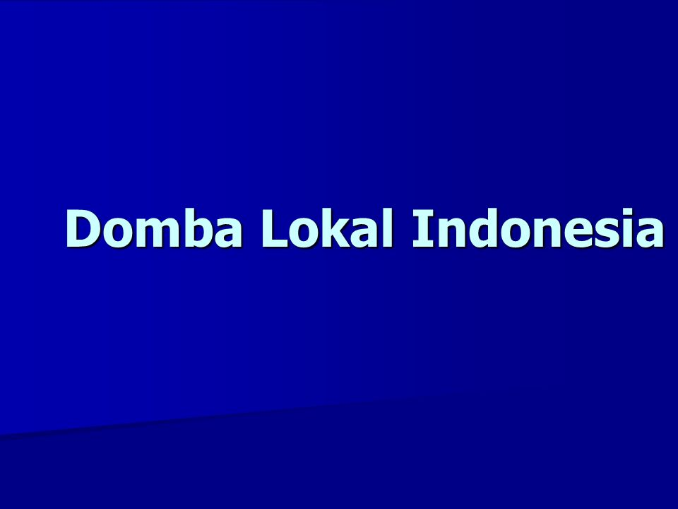 Domba Lokal Indonesia