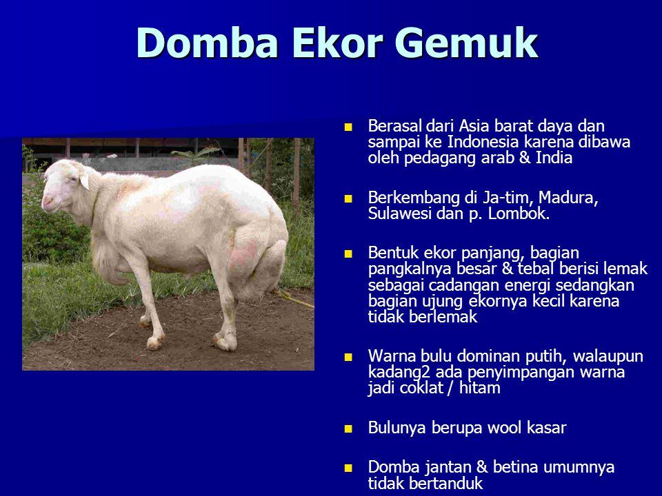 Domba Ekor Gemuk Berasal dari Asia barat daya dan sampai ke Indonesia karena dibawa oleh pedagang arab & India.