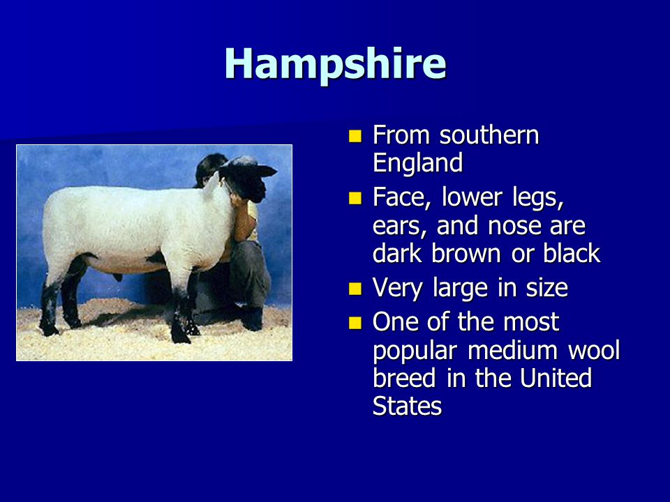 Hampshire From southern England