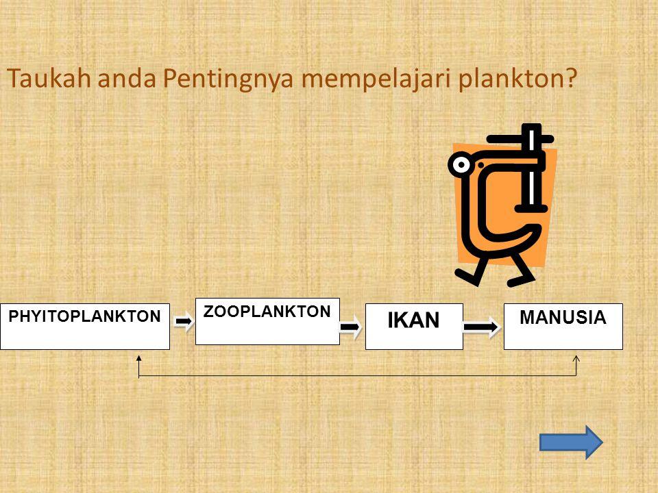 Taukah anda Pentingnya mempelajari plankton