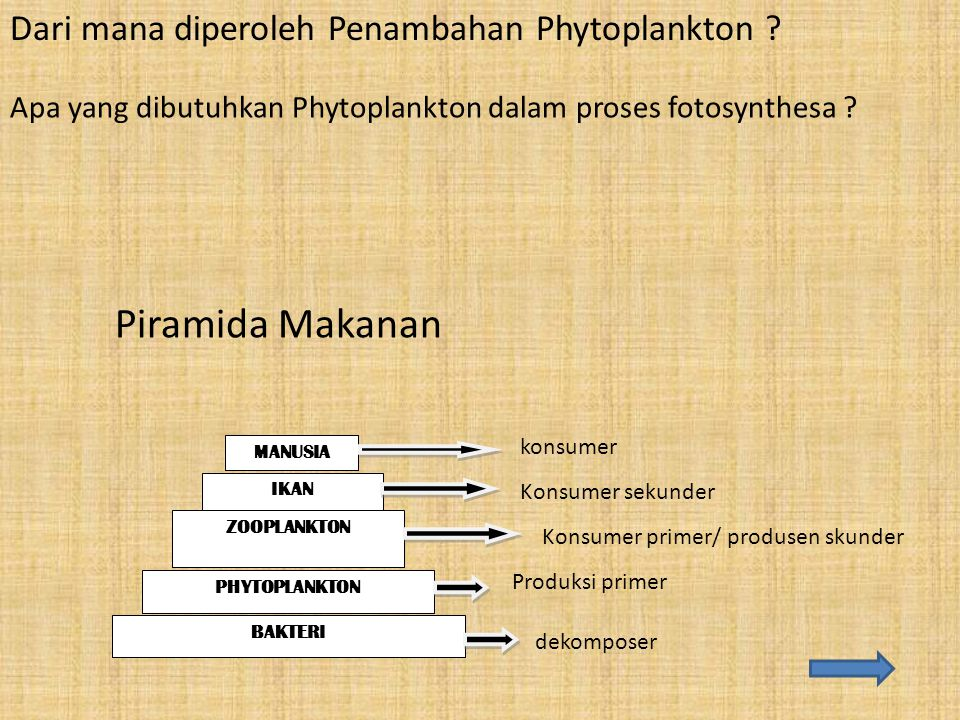 Piramida Makanan Dari mana diperoleh Penambahan Phytoplankton