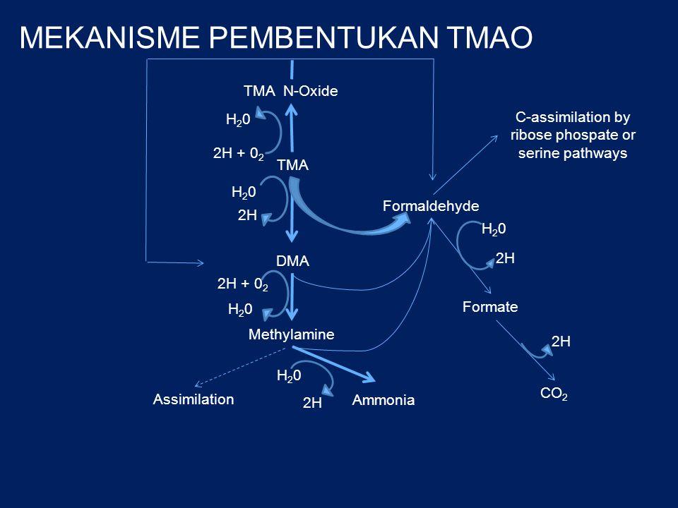 MEKANISME PEMBENTUKAN TMAO