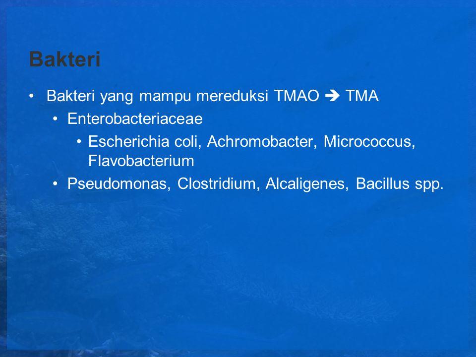 Bakteri Bakteri yang mampu mereduksi TMAO  TMA Enterobacteriaceae
