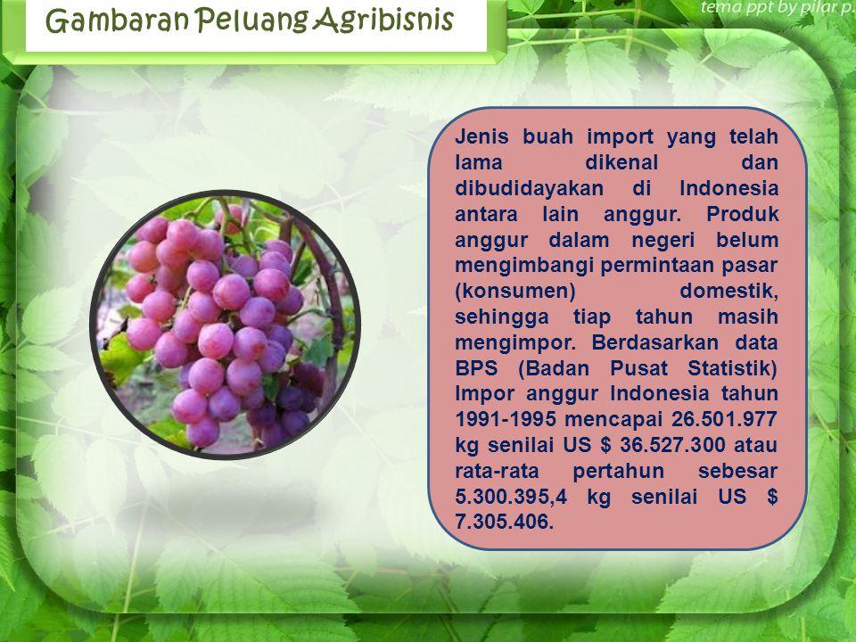 Gambaran Peluang Agribisnis