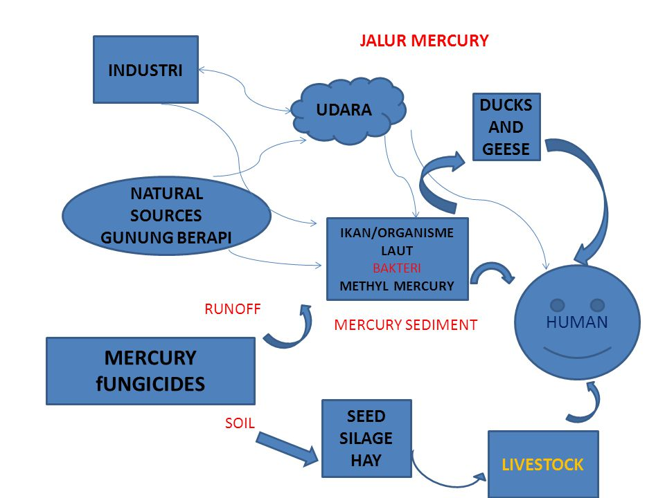 MERCURY fUNGICIDES JALUR MERCURY INDUSTRI UDARA DUCKS AND GEESE