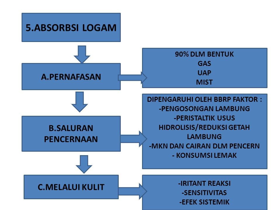 5.ABSORBSI LOGAM A.PERNAFASAN B.SALURAN PENCERNAAN C.MELALUI KULIT