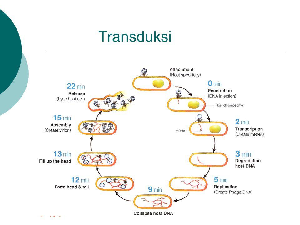 Transduksi