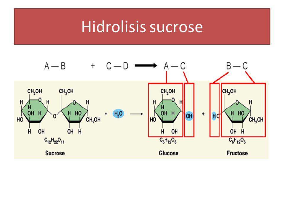 Hidrolisis sucrose